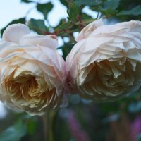 Осень. Crocus Rose :: lenrouz