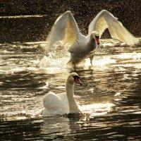 Страсти на озере :: Alexander Andronik
