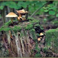 в осеннем лесу :: Дмитрий Анцыферов