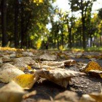 Дороги осени :: Андрей Михайлин