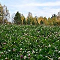 Зелёное поле в осеннем лесу :: Александр