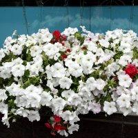 Цветы в городе... :: Тамара (st.tamara)
