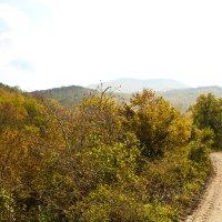 Осенние прогулки :: Константин Николаенко