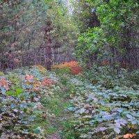 Лесная тропинка :: Алексей http://fotokto.ru/id148151Морозов