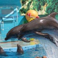 Дельфины :: Ник Macen