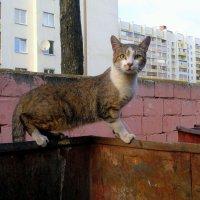 хозяин мусорного бака :: Александр Прокудин