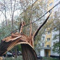 Великан сломался! :: Galina194701