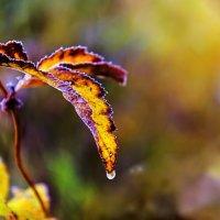 Осенний листок :: Анатолий Иргл