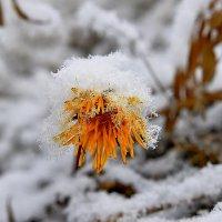 Замерз... :: Витас Бенета