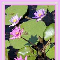 Там лилии цветут... :: Larisa