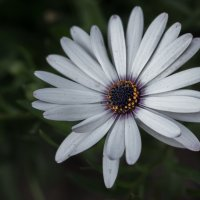 Flower :: Ростислав Крючков