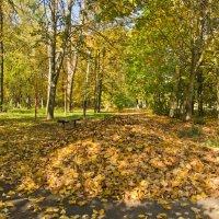 Осенний дворик. :: Виктор Евстратов