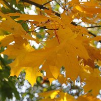 Листья на ветру  поют об осени прекрасной... :: Tatiana Markova