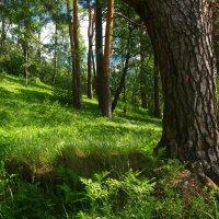 В лесу :: Grey Bishop