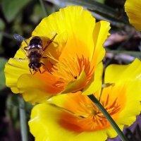 Сбор нектара в сентябре.... :: Владимир Бровко
