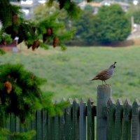 Птичка :: Alexander Hersonski