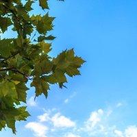 Ранняя осень :: Олег Стасенко