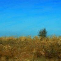 Монолог сухой травы :: Ирина Сивовол