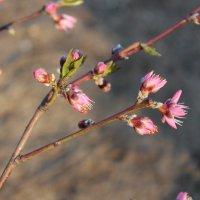 Весна :: Lora Svistun