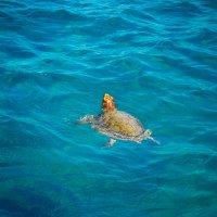 Покатай меня, Большая Черепаха! :: Мария Корнилова