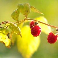 Осенняя :: Андрей Куприянов