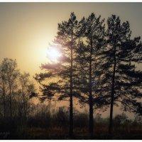 Три девицы :: Александр Чупин