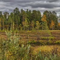 Сибирская осень :: mr. mulla