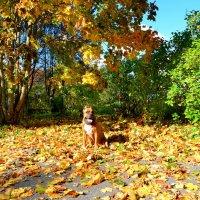 На ковре из опавшей листвы... :: Владимир Буев