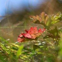 Краски сентября :: Valentina Valentina
