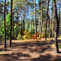 Осень заглянула в лес... :: *MIRA* **