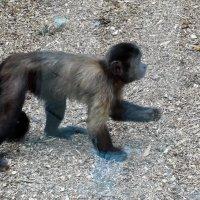 Остров обезьян - 2 :: Наталья Пендюк Пендюк