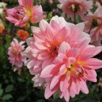 Цветы осени :: Елена Павлова (Смолова)