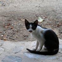Критский котик :: Наташа Ашатан