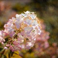 Цветочек :: Annie Makovskaya