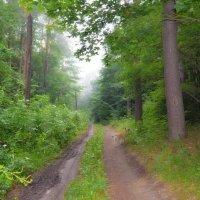 Туманным утром в лесу :: Валентина Данилова
