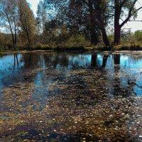 Листья в воде :: Андрей Зайцев