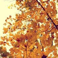 Краски осени :: Kristin Minasova