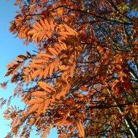 Осень в контражуре :: Ольга