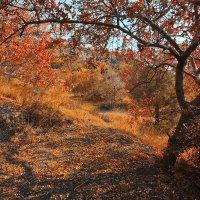 осень в Крыму :: Alexander Asedach