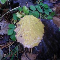 Осень в лесу :: BoxerMak Mak