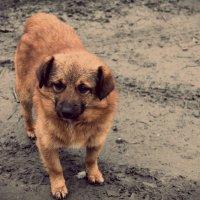 Собачье сердце :: Надежда