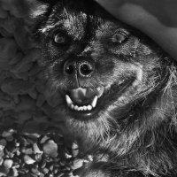 улыбчивая собачка :: крИСТИНА облецова