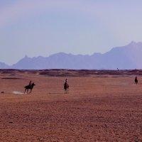 Аравийская пустыня. Наездники. :: Виктор Филиппов
