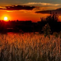 Ковыль-трава по пояс В закате золотится.... :: Анатолий Клепешнёв