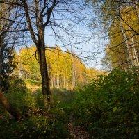 Золотая осень 3 :: Амет Джелилов