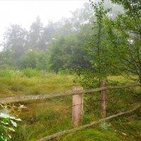 Забор в лесу :: Валентина Данилова