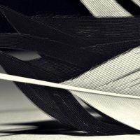 черное и белое :: Юрий С.