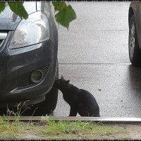 Черная кошка :: Вера