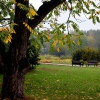 В парке :: Арина Минеева