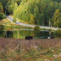 Осень отражается в воде, в ярких красках,  в пестрых кинолентах. :: Galina Leskova